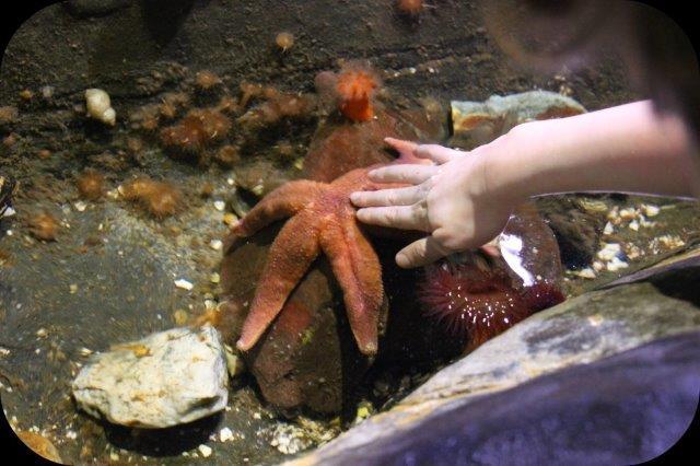 starfishmeet