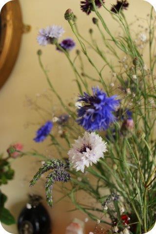 cornflowers1