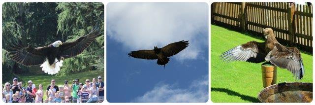 falconry warwick castle